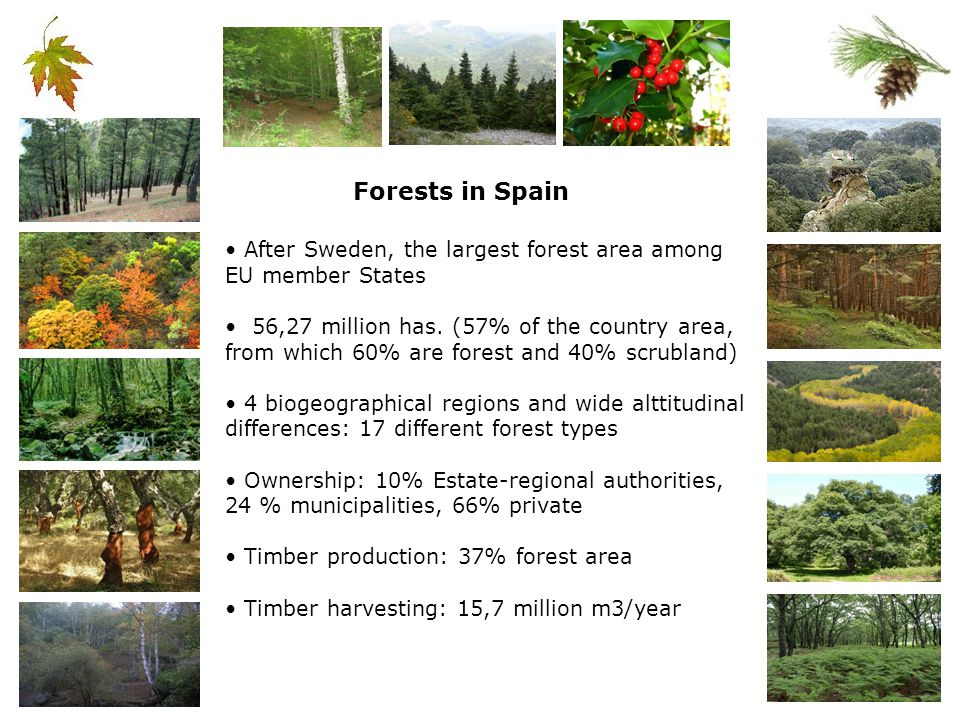 MANAGEMENT INSTRUMENTS Forestry Cattle grazing, other economic activities Hunting Public use, environmental education/information Conservation of habitats and species FOREST MANAGEMENT PLAN (6 th Review in force) Complementary instruments: Plan for the Valsain Forest Hunting Estate