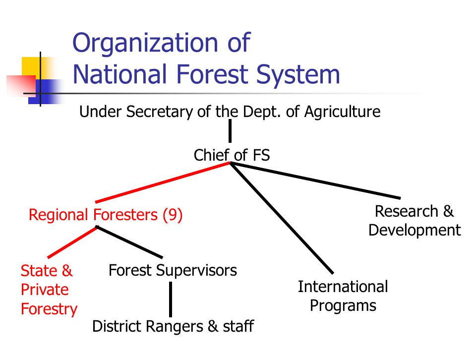 Organization of National Forest System Under Secretary of the Dept.