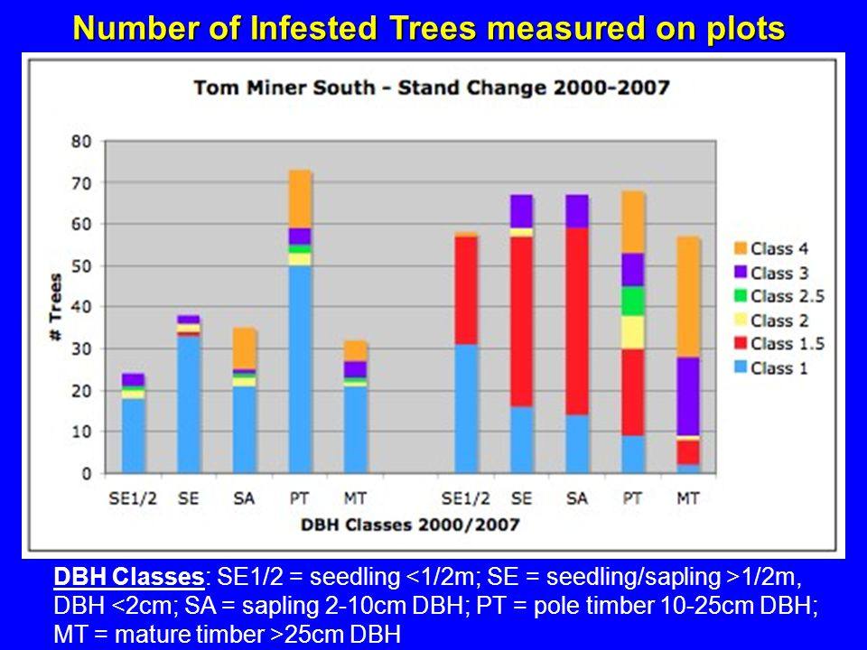 Number of Infested Trees measured on plots DBH Classes: SE1/2 = seedling 1/2m, DBH 25cm DBH