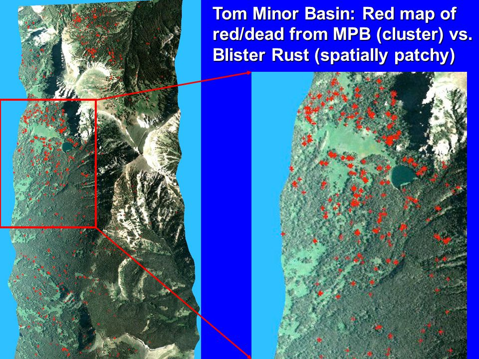 Tom Minor Basin: Red map of red/dead from MPB (cluster) vs. Blister Rust (spatially patchy)