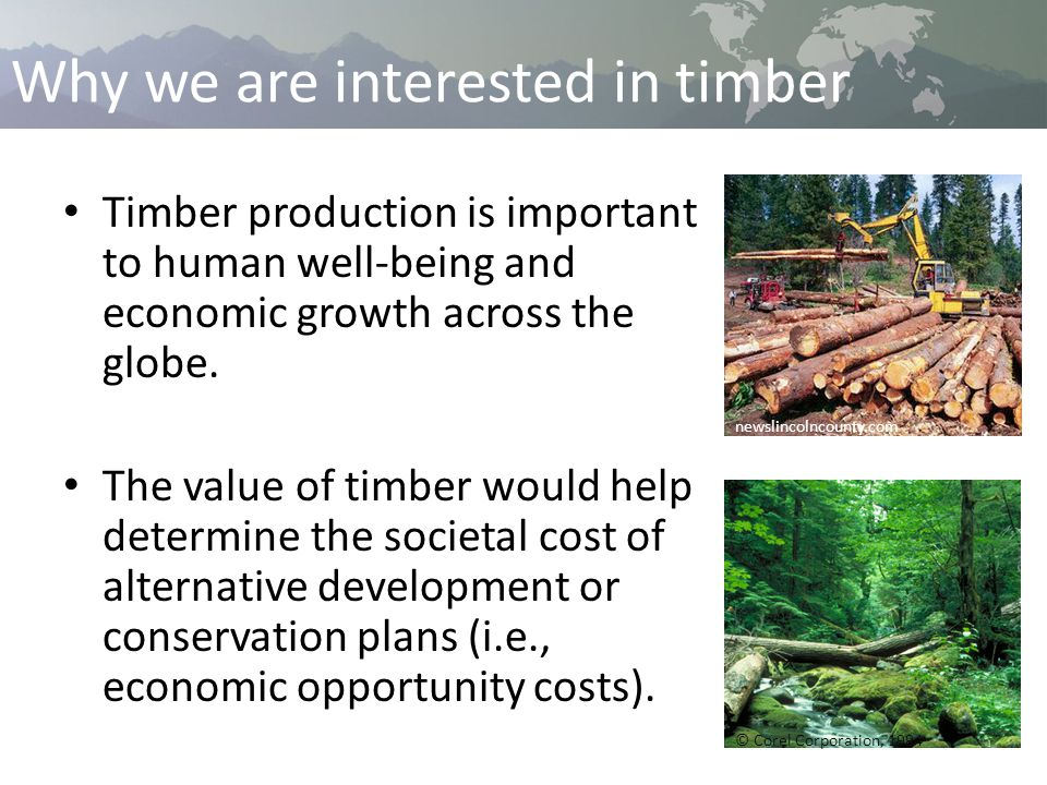 Why we are interested in timber Timber production is important to human well-being and economic growth across the globe.