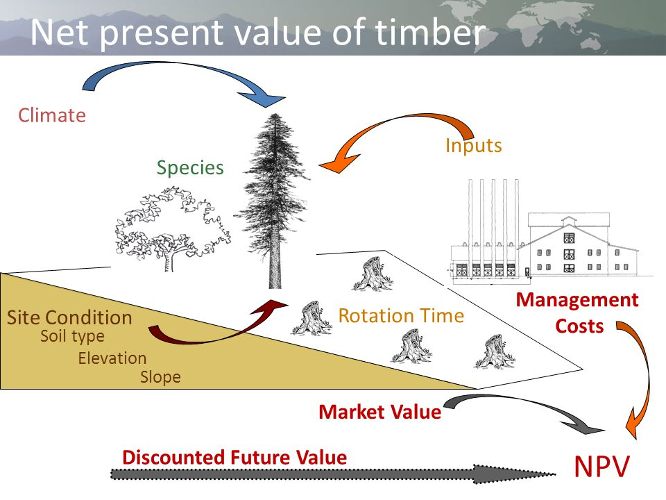 Net present value of timber Climate Inputs Site Condition Soil type Elevation Slope Species Rotation Time Management Costs Market Value NPV Discounted Future Value
