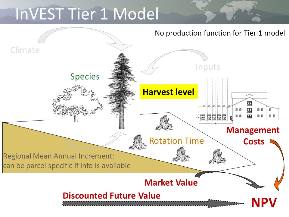 InVEST Tier 1 Model Climate Inputs Regional Mean Annual Increment: can be parcel specific if info is available Species Rotation Time Management Costs Market Value NPV No production function for Tier 1 model Discounted Future Value Harvest level