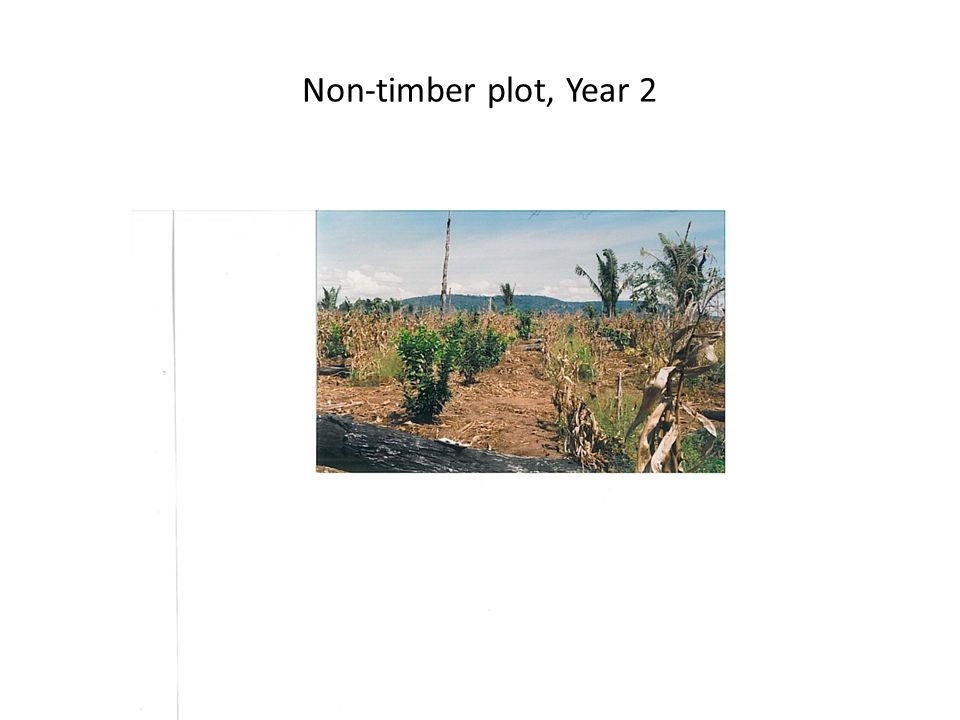 Non-timber plot, Year 2