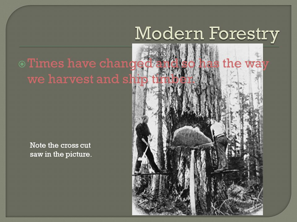  Times have changed and so has the way we harvest and ship timber.