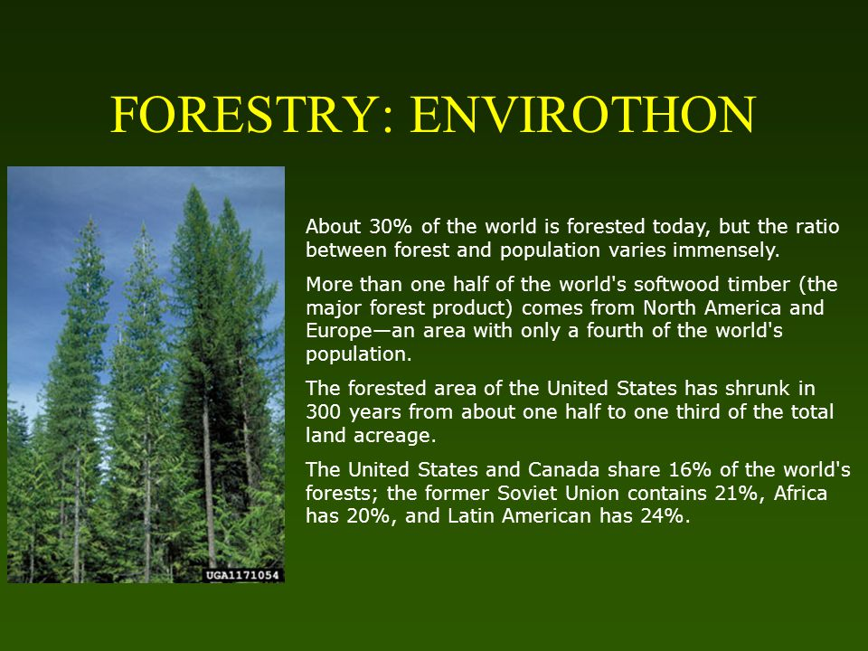 FORESTRY: ENVIROTHON About 30% of the world is forested today, but the ratio between forest and population varies immensely.