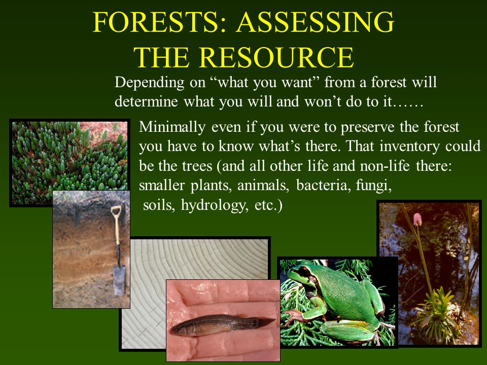 FORESTS: ASSESSING THE RESOURCE Depending on what you want from a forest will determine what you will and won't do to it…… Minimally even if you were to preserve the forest you have to know what's there.