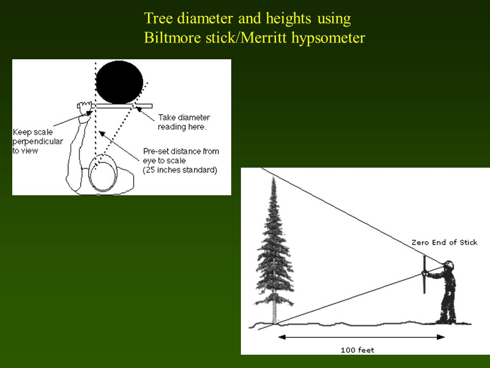 Tree diameter and heights using Biltmore stick/Merritt hypsometer