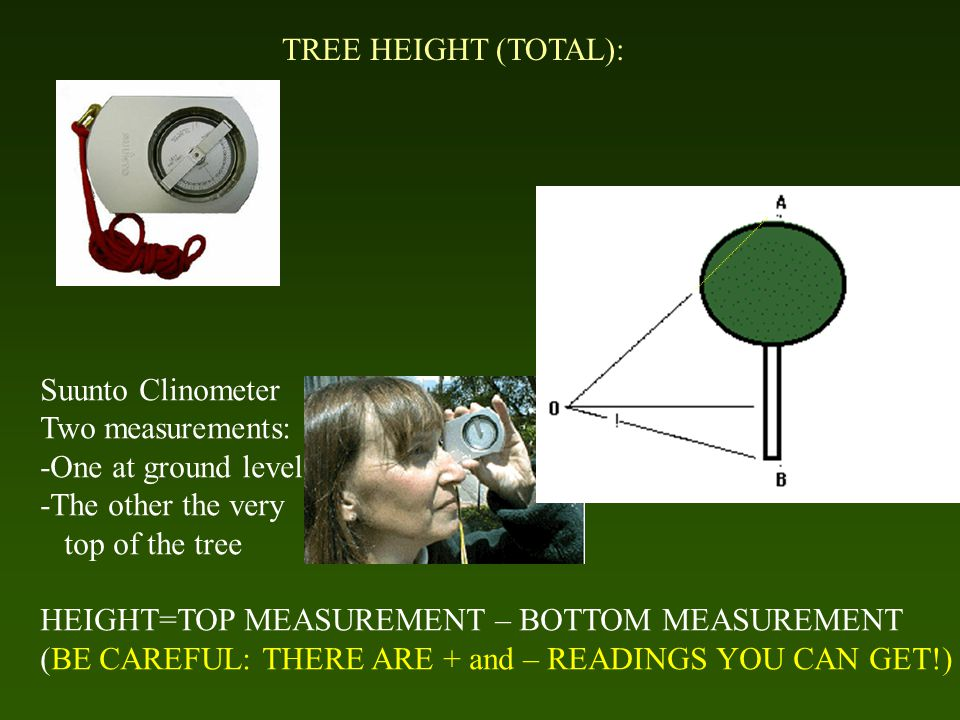 TREE HEIGHT (TOTAL): Suunto Clinometer Two measurements: -One at ground level -The other the very top of the tree HEIGHT=TOP MEASUREMENT – BOTTOM MEASUREMENT (BE CAREFUL: THERE ARE + and – READINGS YOU CAN GET!)