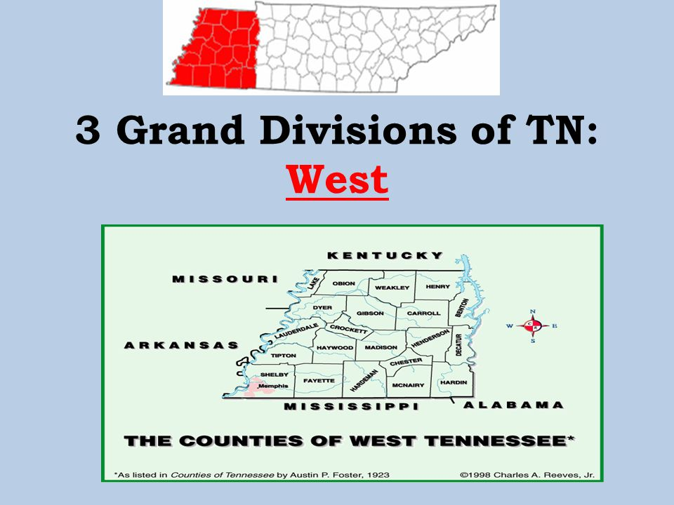 3 Grand Divisions of TN: Middle