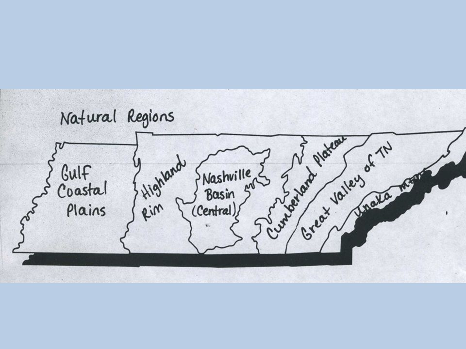 Select the natural resources found in the 3 grand divisions of TN (coal, copper, timber, plants, animals) 7.3.5 EAST WEST MIDDLE