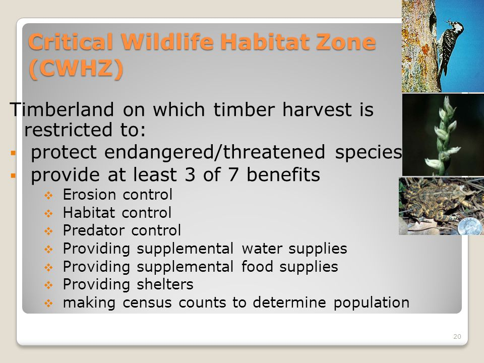 Critical Wildlife Habitat Zone (CWHZ) Timberland on which timber harvest is restricted to:  protect endangered/threatened species  provide at least