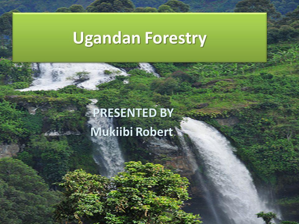 Ugandan Forestry PRESENTED BY Mukiibi Robert Mukiibi Robert.