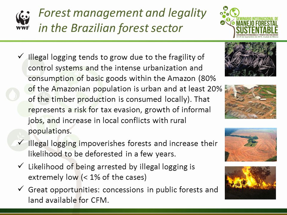 Forest management and legality in the Brazilian forest sector Illegal logging tends to grow due to the fragility of control systems and the intense urbanization and consumption of basic goods within the Amazon (80% of the Amazonian population is urban and at least 20% of the timber production is consumed locally).