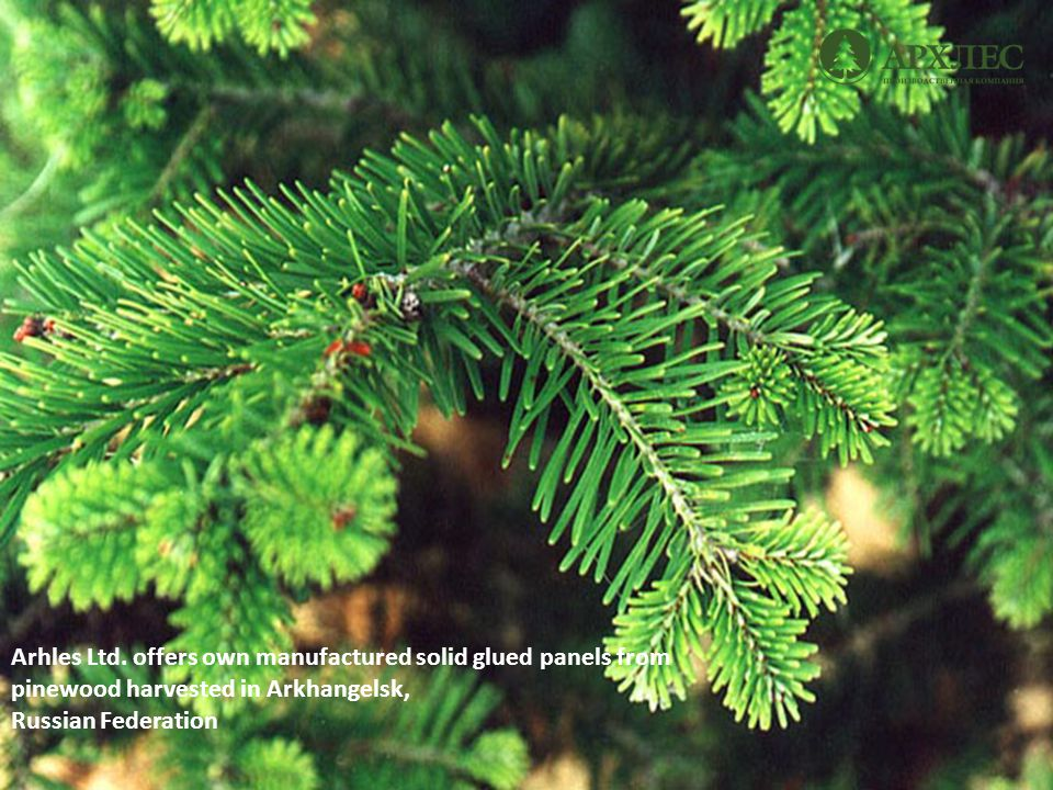 Arhles Ltd. offers own manufactured solid glued panels from pinewood harvested in Arkhangelsk, Russian Federation