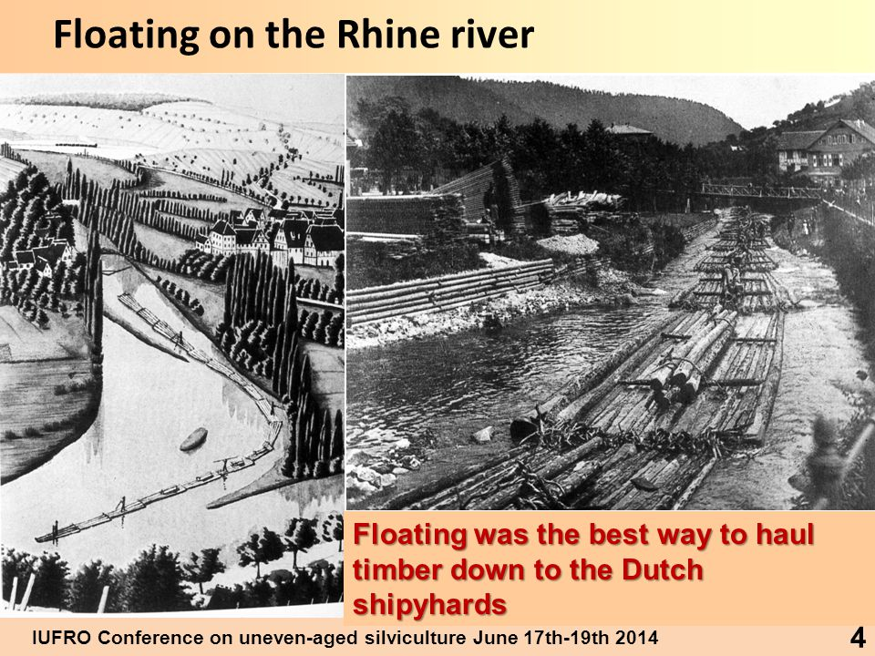 IUFRO Conference on uneven-aged silviculture June 17th-19th 2014 4 Floating on the Rhine river Floating was the best way to haul timber down to the Dutch shipyhards