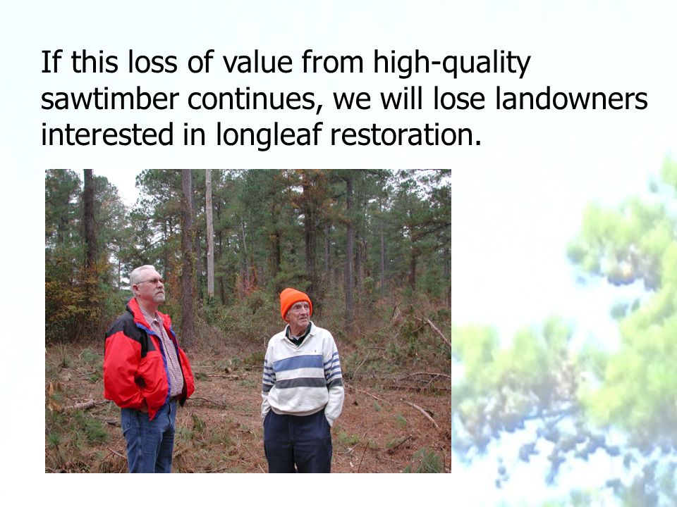 If this loss of value from high-quality sawtimber continues, we will lose landowners interested in longleaf restoration.