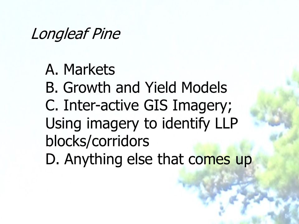 Longleaf Pine A. Markets B. Growth and Yield Models C.