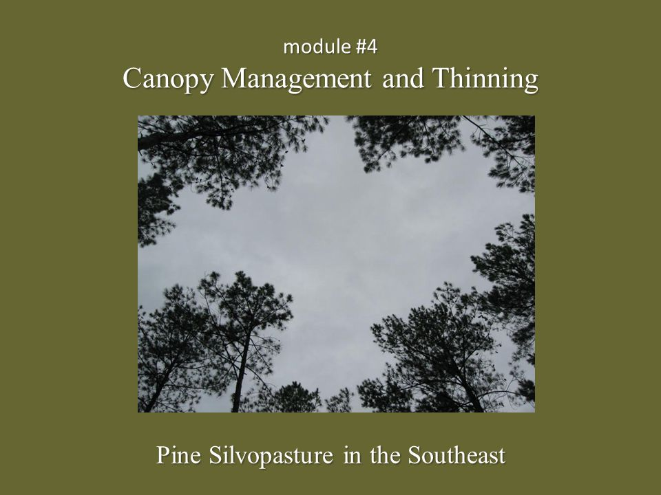 module #4 Canopy Management and Thinning Pine Silvopasture in the Southeast