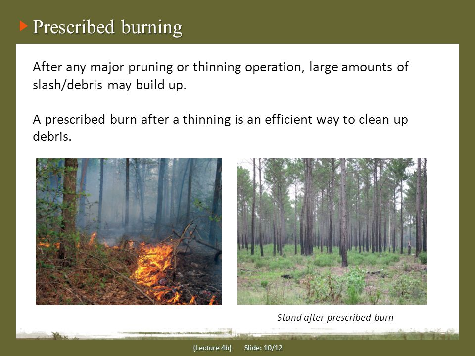 Prescribed burning {Lecture 4b} Slide: 10/12 After any major pruning or thinning operation, large amounts of slash/debris may build up. A prescribed b