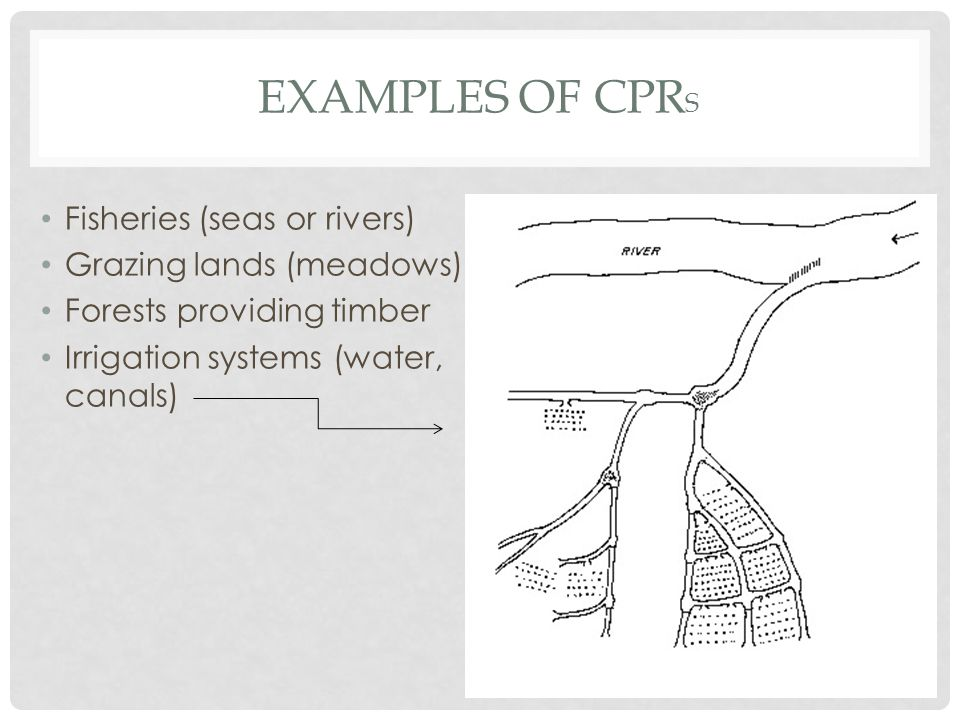 EXAMPLES OF CPR S Fisheries (seas or rivers) Grazing lands (meadows) Forests providing timber Irrigation systems (water, canals)