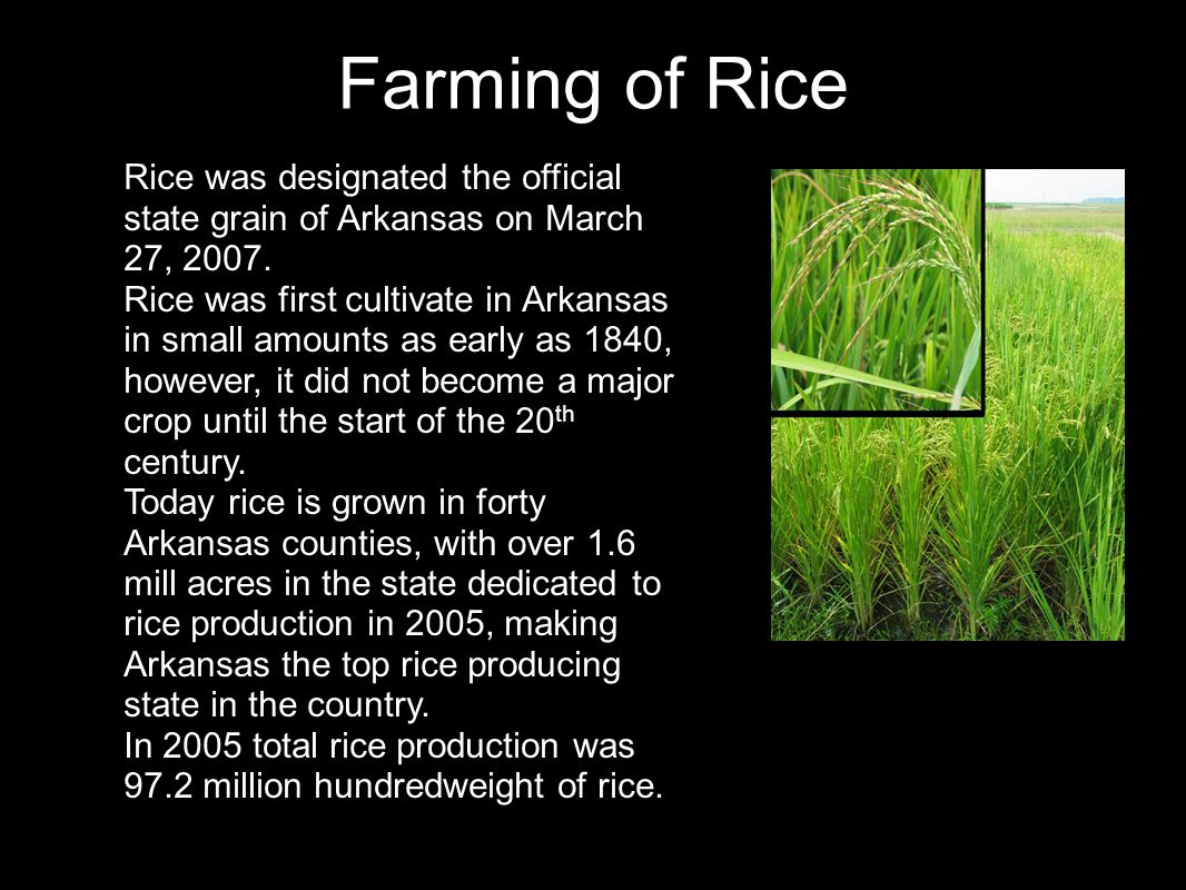 Farming of Rice Rice was designated the official state grain of Arkansas on March 27, 2007. Rice was first cultivate in Arkansas in small amounts as e