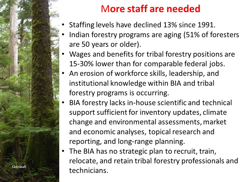Quinault More staff are needed Staffing levels have declined 13% since 1991.