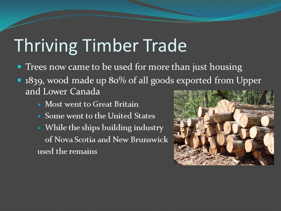 Thriving Timber Trade Trees now came to be used for more than just housing 1839, wood made up 80% of all goods exported from Upper and Lower Canada Most went to Great Britain Some went to the United States While the ships building industry of Nova Scotia and New Brunswick used the remains