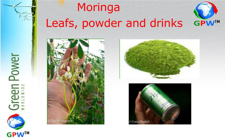 Moringa Leafs, powder and drinks