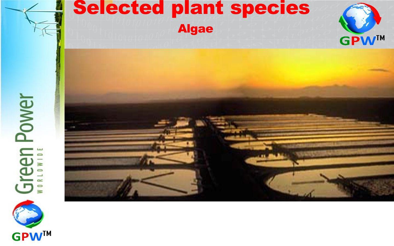 Selected plant species Algae