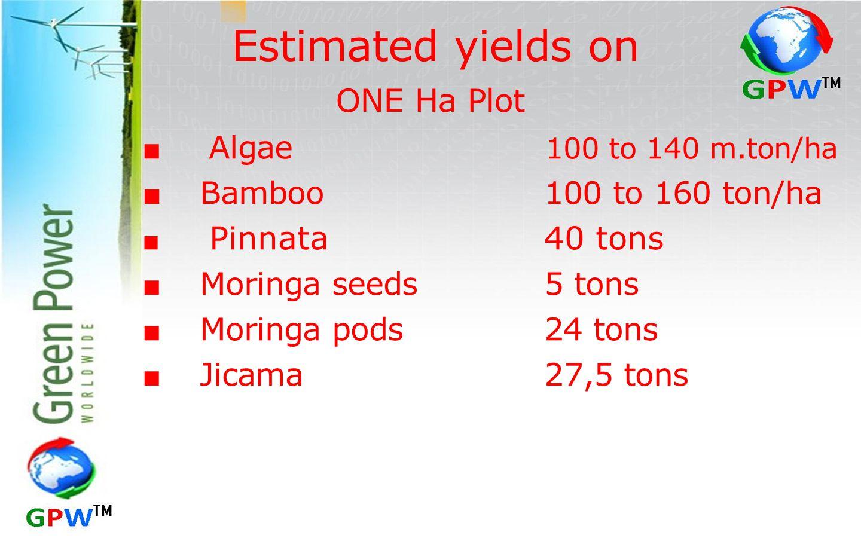 Estimated yields on ONE Ha Plot ■ Algae 100 to 140 m.ton/ha ■ Bamboo100 to 160 ton/ha ■ Pinnata40 tons ■ Moringa seeds 5 tons ■ Moringa pods24 tons ■ Jicama27,5 tons