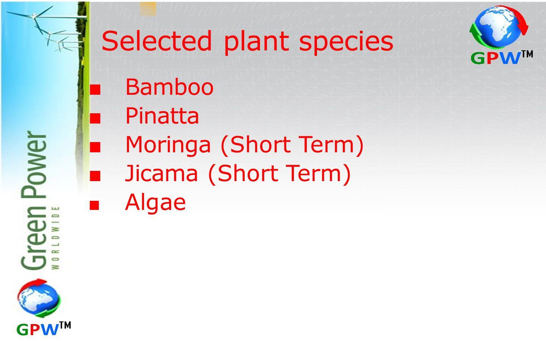 Selected plant species ■ Bamboo ■ Pinatta ■ Moringa (Short Term) ■ Jicama (Short Term) ■ Algae