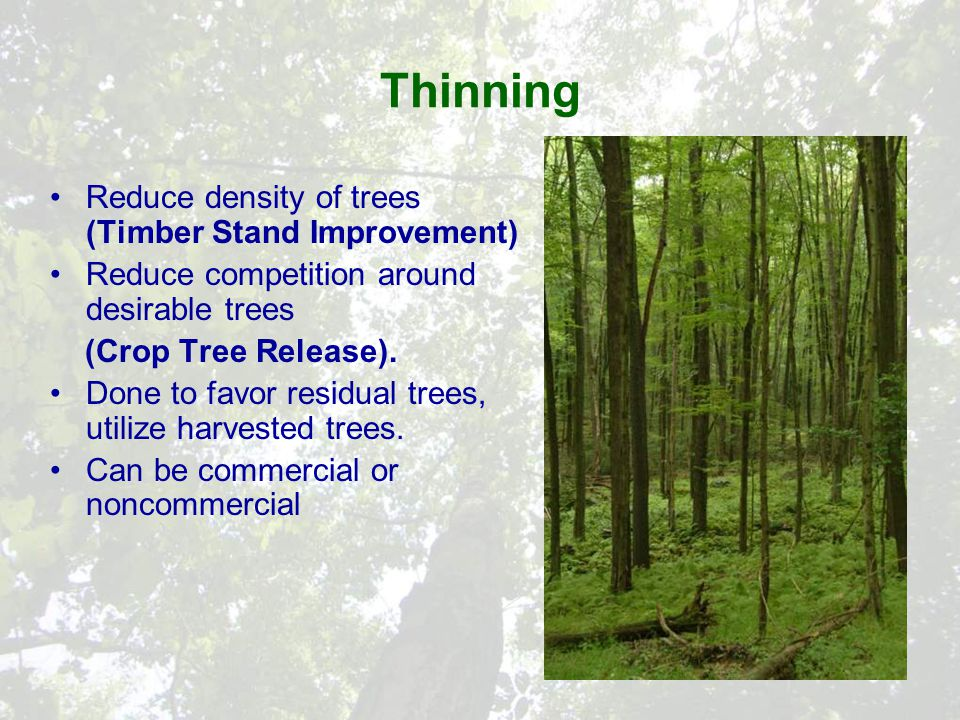 Thinning Reduce density of trees (Timber Stand Improvement) Reduce competition around desirable trees (Crop Tree Release).