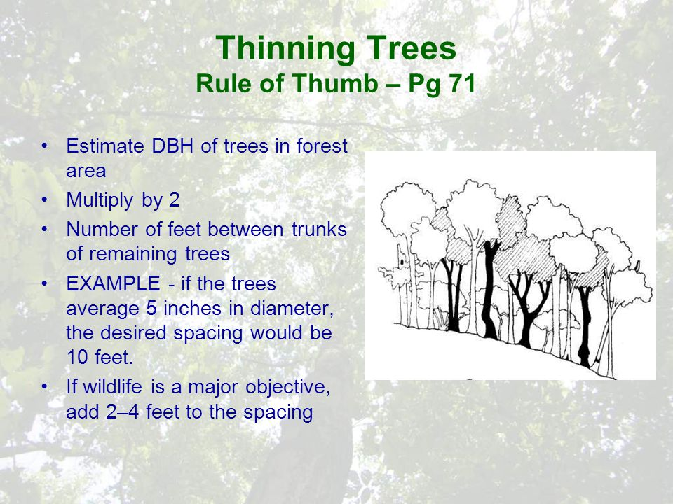 Thinning Trees Rule of Thumb – Pg 71 Estimate DBH of trees in forest area Multiply by 2 Number of feet between trunks of remaining trees EXAMPLE - if the trees average 5 inches in diameter, the desired spacing would be 10 feet.
