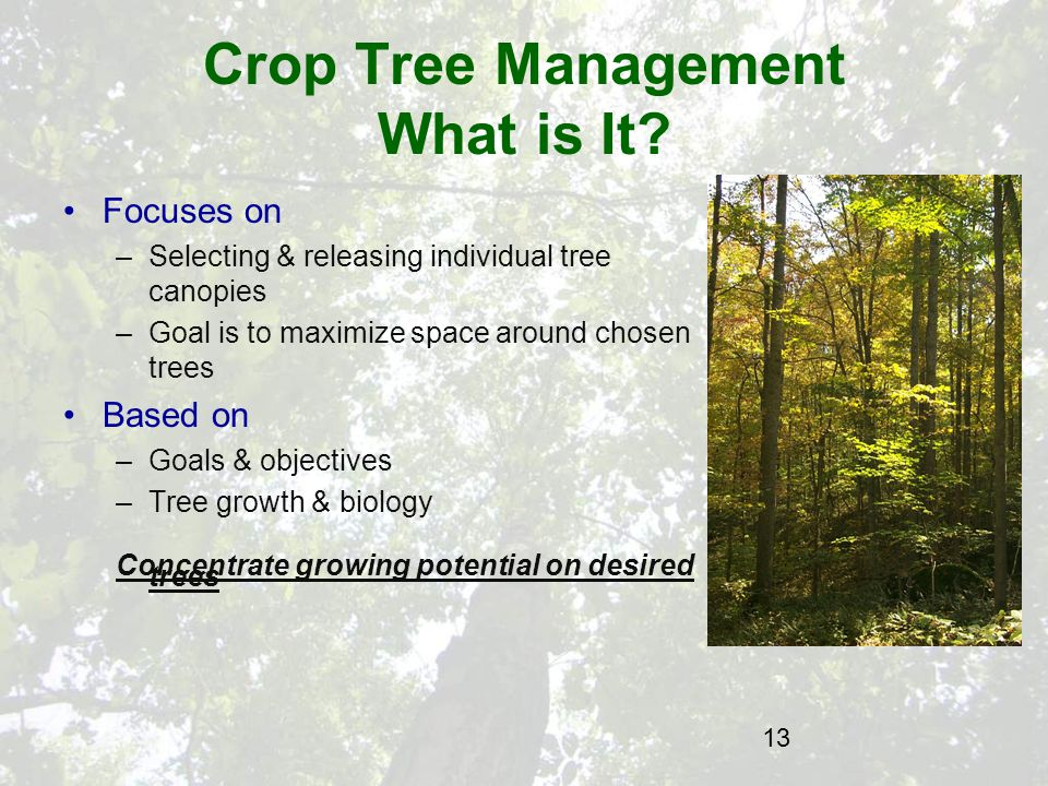 13 Crop Tree Management What is It.