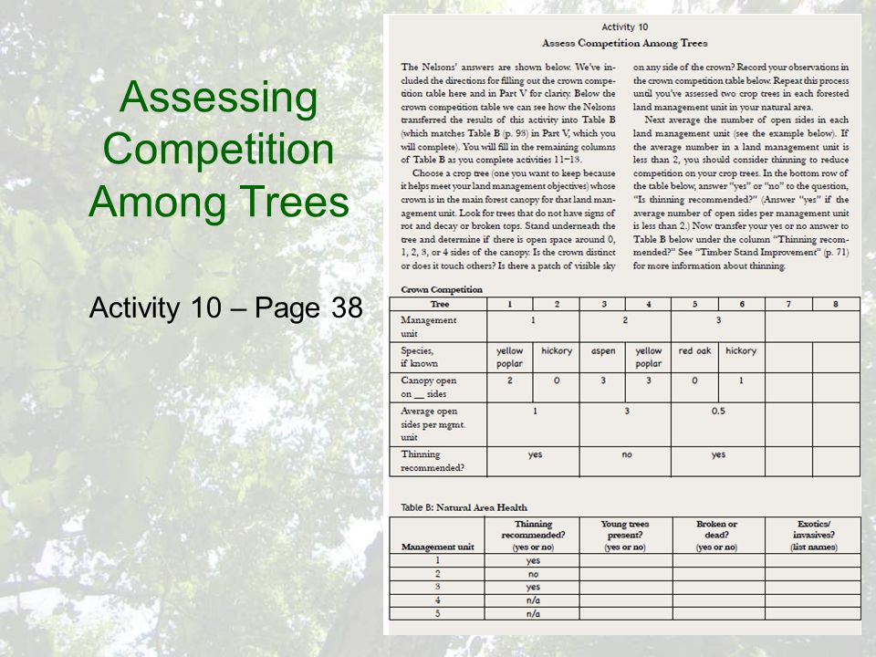 Assessing Competition Among Trees Activity 10 – Page 38