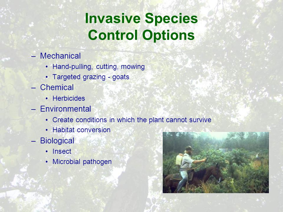 Invasive Species Control Options –Mechanical Hand-pulling, cutting, mowing Targeted grazing - goats –Chemical Herbicides –Environmental Create conditions in which the plant cannot survive Habitat conversion –Biological Insect Microbial pathogen