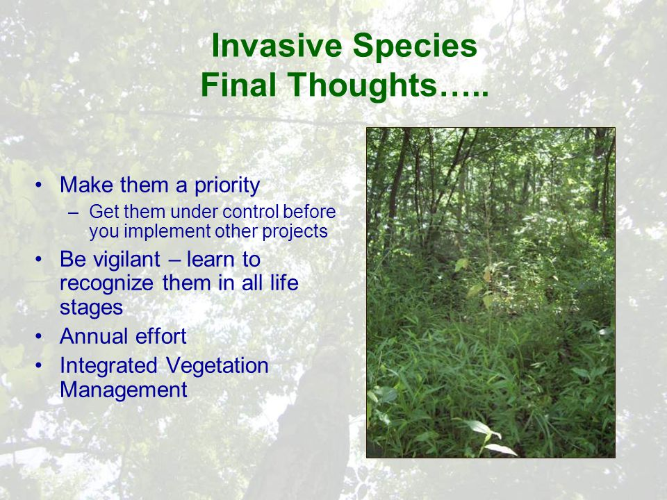 Invasive Species Final Thoughts…..