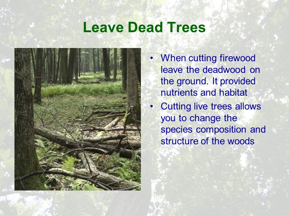 Leave Dead Trees When cutting firewood leave the deadwood on the ground.