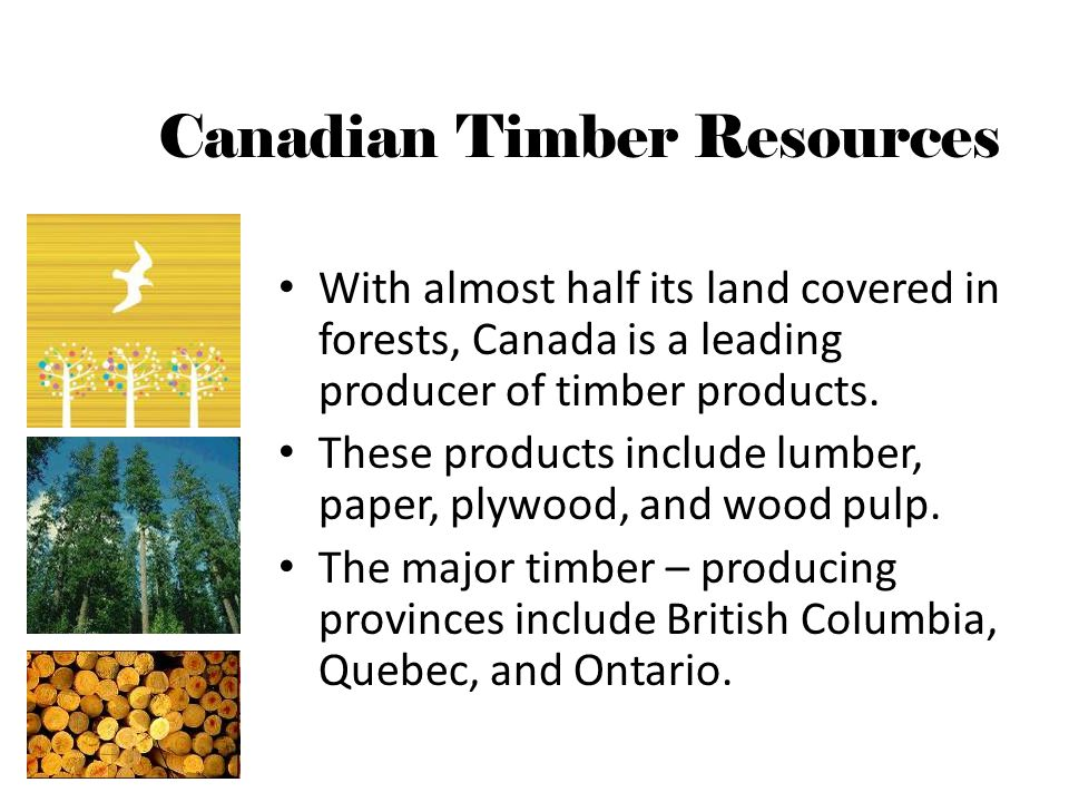 With almost half its land covered in forests, Canada is a leading producer of timber products.