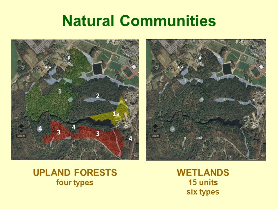 Natural Communities UPLAND FORESTS four types WETLANDS 15 units six types