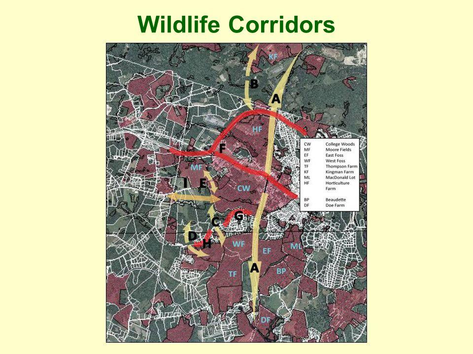 Wildlife Corridors I