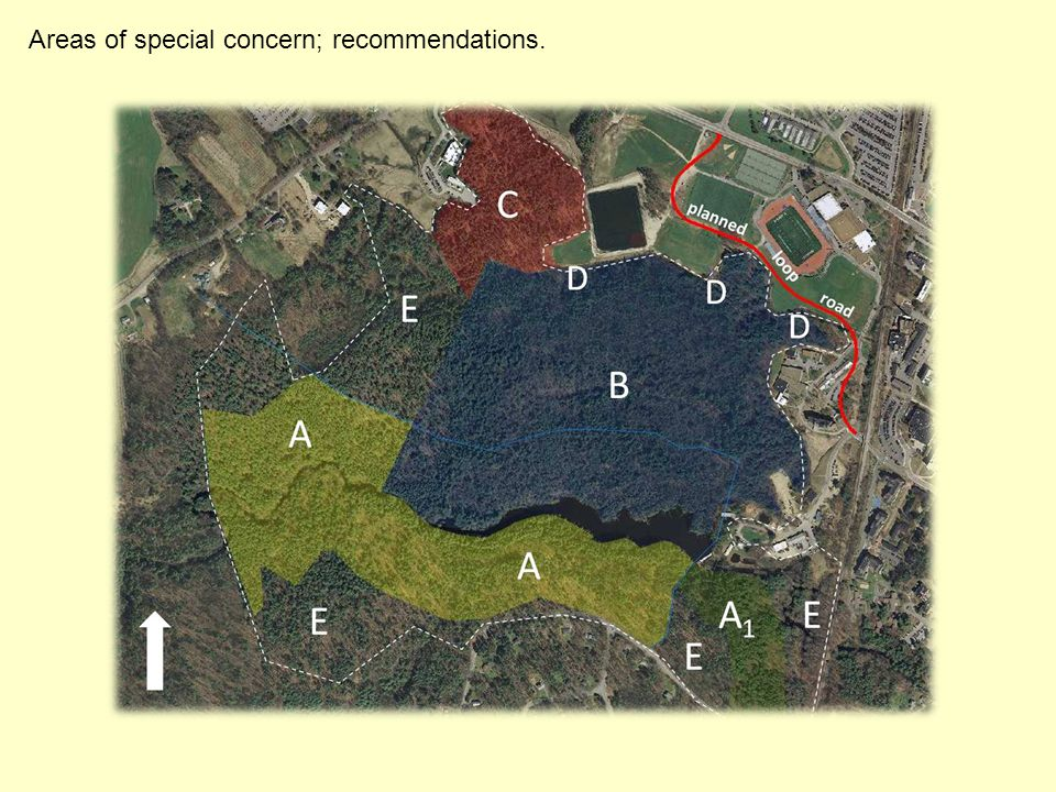 Areas of special concern; recommendations.