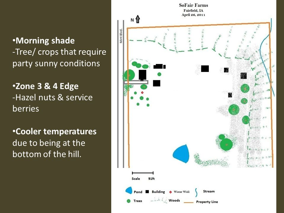 Pond ranges in depth -Free floating, severable, emergent, & floating leaf plants Warming -less frost Light radiation -W.