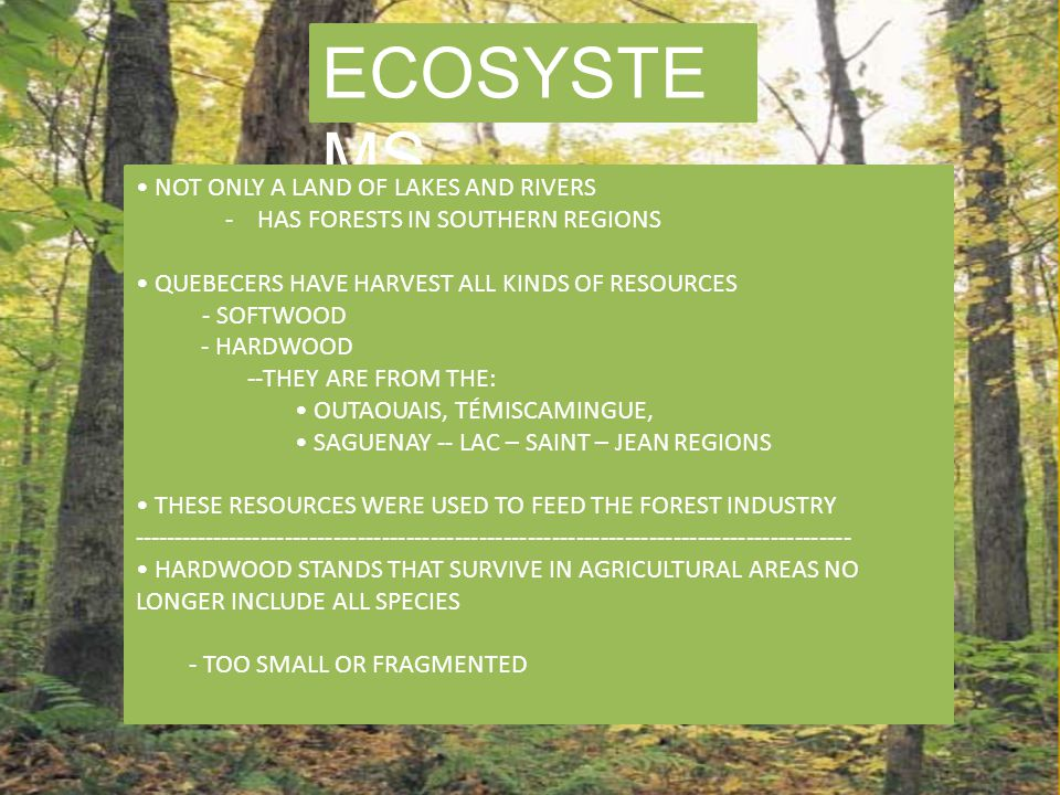 ECOSYSTE MS NOT ONLY A LAND OF LAKES AND RIVERS - HAS FORESTS IN SOUTHERN REGIONS QUEBECERS HAVE HARVEST ALL KINDS OF RESOURCES - SOFTWOOD - HARDWOOD --THEY ARE FROM THE: OUTAOUAIS, TÉMISCAMINGUE, SAGUENAY -- LAC – SAINT – JEAN REGIONS THESE RESOURCES WERE USED TO FEED THE FOREST INDUSTRY ----------------------------------------------------------------------------------------- HARDWOOD STANDS THAT SURVIVE IN AGRICULTURAL AREAS NO LONGER INCLUDE ALL SPECIES - TOO SMALL OR FRAGMENTED