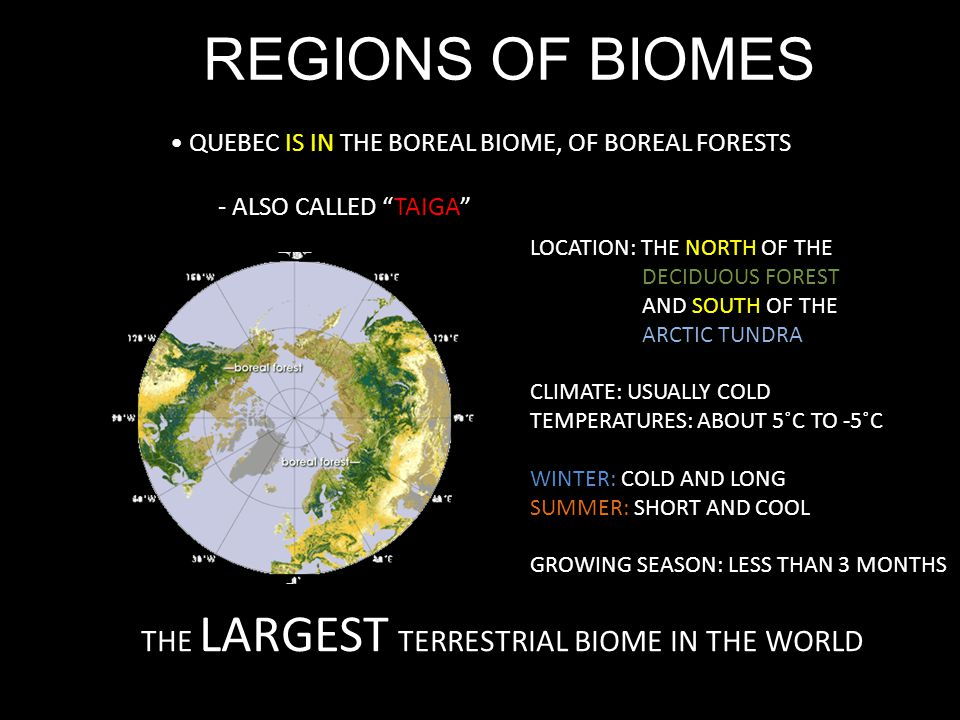 REGIONS OF BIOMES QUEBEC IS IN THE BOREAL BIOME, OF BOREAL FORESTS - ALSO CALLED TAIGA THE LARGEST TERRESTRIAL BIOME IN THE WORLD LOCATION: THE NORTH OF THE DECIDUOUS FOREST AND SOUTH OF THE ARCTIC TUNDRA CLIMATE: USUALLY COLD TEMPERATURES: ABOUT 5˚C TO -5˚C WINTER: COLD AND LONG SUMMER: SHORT AND COOL GROWING SEASON: LESS THAN 3 MONTHS