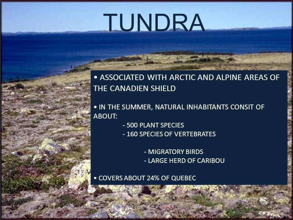 TUNDRA ASSOCIATED WITH ARCTIC AND ALPINE AREAS OF THE CANADIEN SHIELD IN THE SUMMER, NATURAL INHABITANTS CONSIT OF ABOUT: - 500 PLANT SPECIES - 160 SPECIES OF VERTEBRATES - MIGRATORY BIRDS - LARGE HERD OF CARIBOU COVERS ABOUT 24% OF QUEBEC