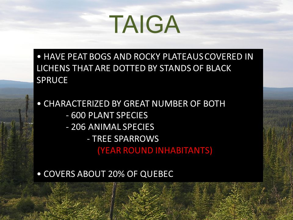 TAIGA HAVE PEAT BOGS AND ROCKY PLATEAUS COVERED IN LICHENS THAT ARE DOTTED BY STANDS OF BLACK SPRUCE CHARACTERIZED BY GREAT NUMBER OF BOTH - 600 PLANT SPECIES - 206 ANIMAL SPECIES - TREE SPARROWS (YEAR ROUND INHABITANTS) COVERS ABOUT 20% OF QUEBEC