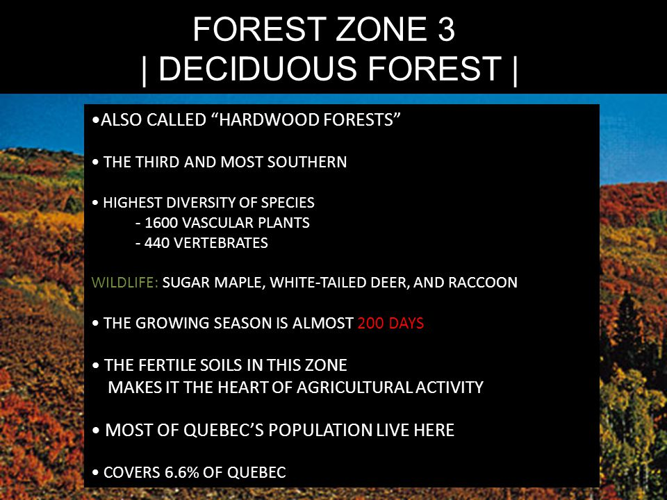 FOREST ZONE 3 | DECIDUOUS FOREST | ALSO CALLED HARDWOOD FORESTS THE THIRD AND MOST SOUTHERN HIGHEST DIVERSITY OF SPECIES - 1600 VASCULAR PLANTS - 440 VERTEBRATES WILDLIFE: SUGAR MAPLE, WHITE-TAILED DEER, AND RACCOON THE GROWING SEASON IS ALMOST 200 DAYS THE FERTILE SOILS IN THIS ZONE MAKES IT THE HEART OF AGRICULTURAL ACTIVITY MOST OF QUEBEC'S POPULATION LIVE HERE COVERS 6.6% OF QUEBEC