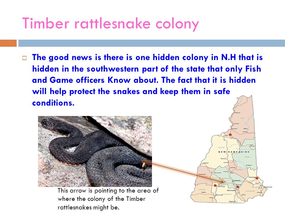 The Northern Water Snake  The Northern Water snake averages 30-40 inches long  They vary in color  The diet of these aquatic snakes consists mainly of various small-sized fish, frogs, toads and salamanders.